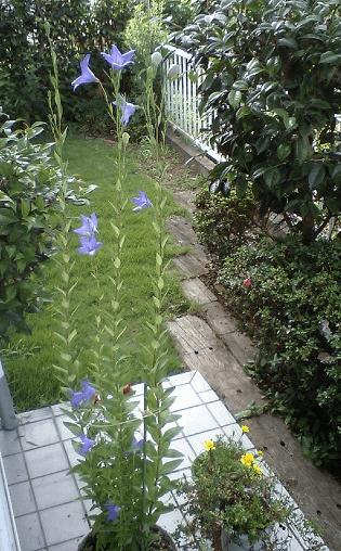 150509kikyou2008b