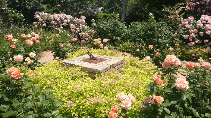 150526花菜ガーデン4