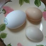 栄養価がすごいというウコッケイの卵 初めて食べました