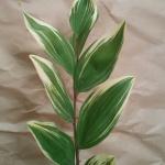 【フラワーアレンジメント】葉物(グリーン)の上手な使い方講座3【ナルコユリ】
