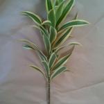 【フラワーアレンジメント】葉物(グリーン)使い方と使用例6 【ドラセナ】