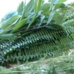 【フラワーアレンジ】に使いやすいグリーン(葉物) 基本素材と使い方