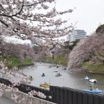 【皇居乾通り】2016通り抜け①行ってきました!千鳥ヶ淵の桜も5分咲き位でした