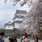 【小田原城】桜が満開でした!江戸時代各地の築城に影響したお城だったんですね