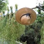 【菜の花】おひたしで楽しんで 今日は夏庭に向けて種を収穫!