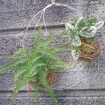 【苔だま】簡単な材料で作れる!夏にかわいくて爽やかな苔だま風な緑をおすすめ