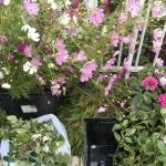 【水彩画作品展】花装飾の準備中!リリスで10日からです