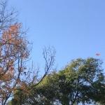 大好きな【枯葉のシャワー】が降る景色を鼻水をかみながら眺めています!