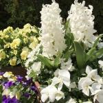 春ですね!お花見を私は庭で楽しみました!