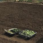 【家庭菜園】新しい畑を借りる事になりました!