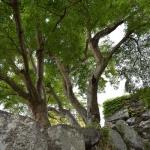 【松阪城跡】建物の無い城跡はみはらしの良い公園でした。