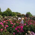 5月15日花菜ガーデンはバラの見ごろでした!