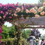 5月26日花菜ガーデン行ってきました!バラ開花時期2度目です!
