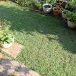 【芝に目土】を入れて1ヶ月、芝が再生してきました!雑草の予防にも効果が期待されます