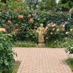 【花菜ガーデン】6月1日に行ってきました!バラのピークは過ぎていました