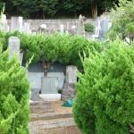 【ネコソギ】AL1.0 お墓のどくだみ除草に効果がありました