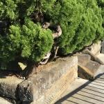 【鎌倉石】も年季が入ってきました!墓地の維持はホント大変!
