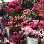 【東京堂】造花の進化に感心!今の造花は自然に美しい!