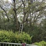 春の外回り仕事2【大木の剪定】葉が出る前に!小型ノコギリで切れました!