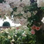 【ネットでお庭散策】第1回イギリスの庭の薔薇