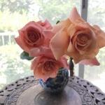 【バラ】今年はいつもより早い開花の種類と遅い種類があります!
