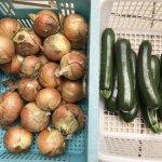 【家庭菜園】玉ねぎも収穫タイミングが難しいみたい あれこれ上手くはいかない!ちょっと愚痴・・・
