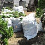 【お墓掃除】雨の止み間を狙って生垣剪定してきました!除草剤の効果ありました!