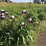 【フラワーアレンジメント】庭の花を使う時の水揚げや準備の仕方!